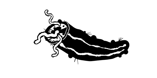 snozzcumber